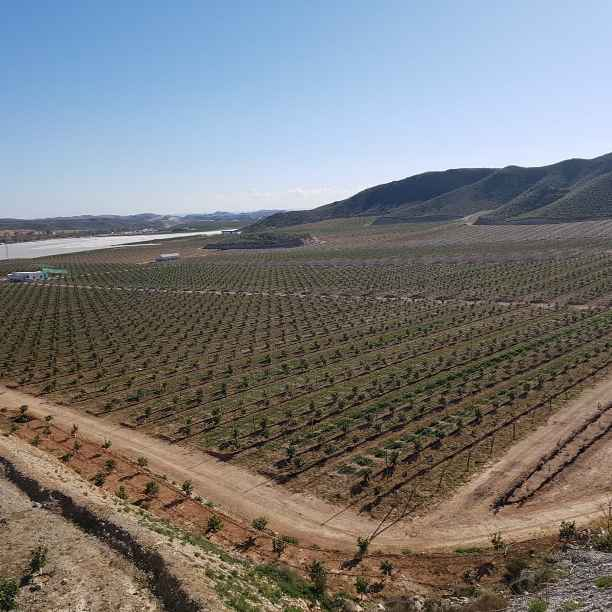 Agricultura que da vida: antes y después de un campo ecológico