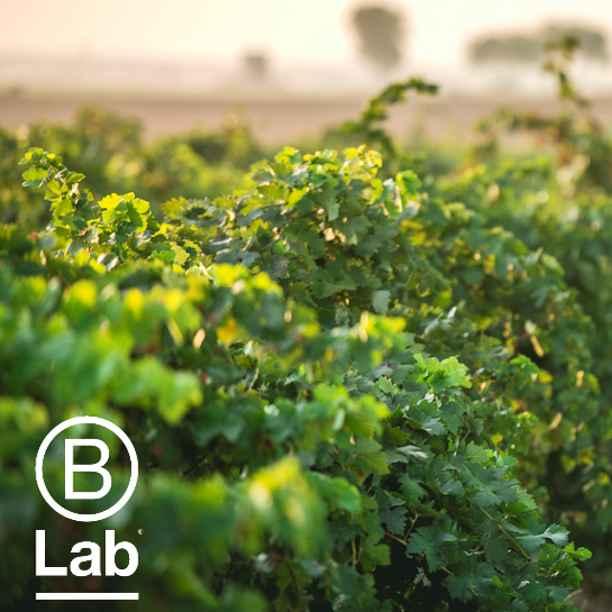 Triodos Bank revalida B Corp: empresas que quieren ser mejores para el mundo