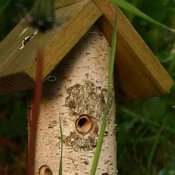 ¿Un hotel de insectos?