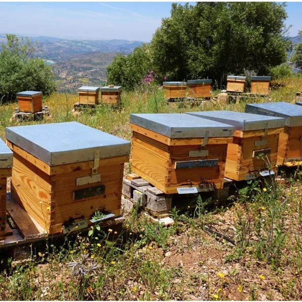 Emprendimiento rural. La apicultura como una forma de vida