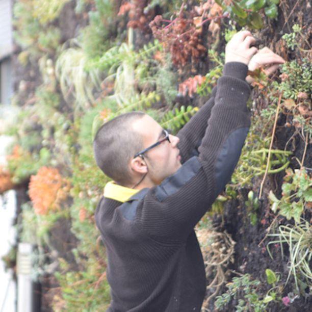 El jardín vertical: un muro de oportunidades