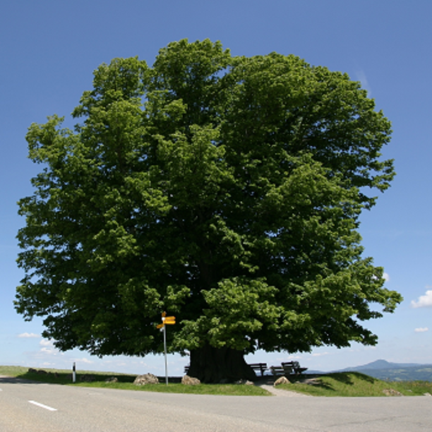 Reducir antes que compensar: cómo Triodos Bank es un banco 100% neutro en CO₂
