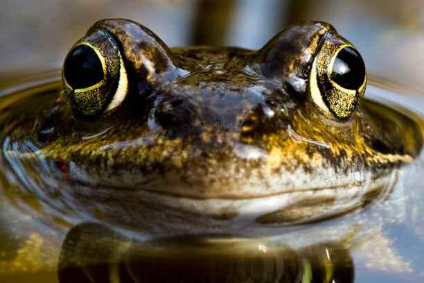 Triodos Bank firma el Compromiso Financiero por la Biodiversidad